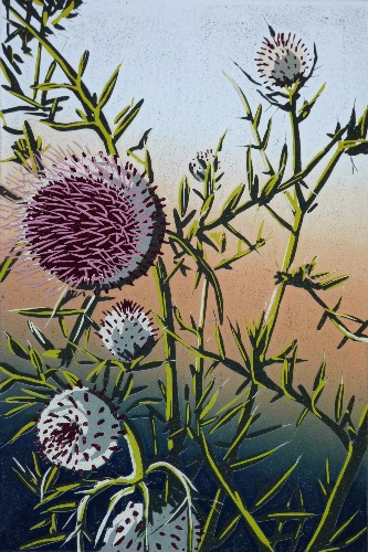 Woolly Thistle by Alexandra Buckle