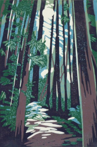 Sunlight Through Redwoods by Alexandra Buckle