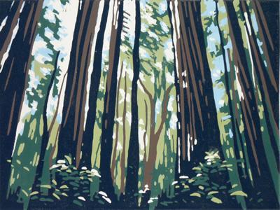 Sunlight Through Redwoods #2 by Alexandra Buckle