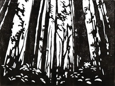 Sunlight Through Redwoods #2 in Black by Alexandra Buckle