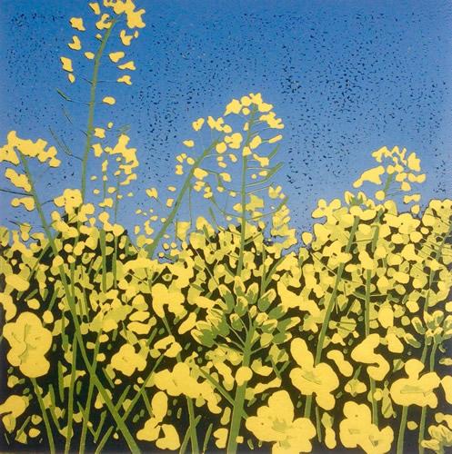Yellow Field by Alexandra Buckle